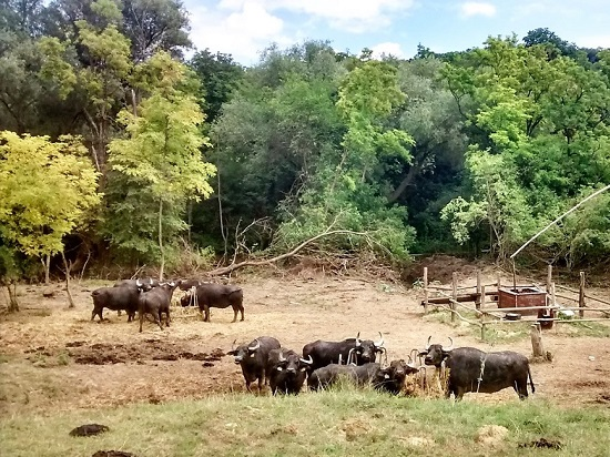 Bison park Somogyacsa
